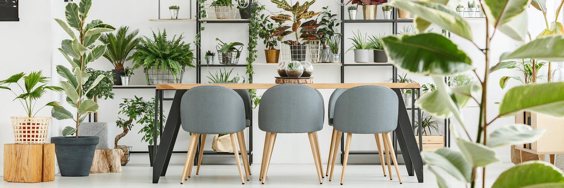 Biophilic design - ważny trend w projektowaniu przestrzeni biurowej