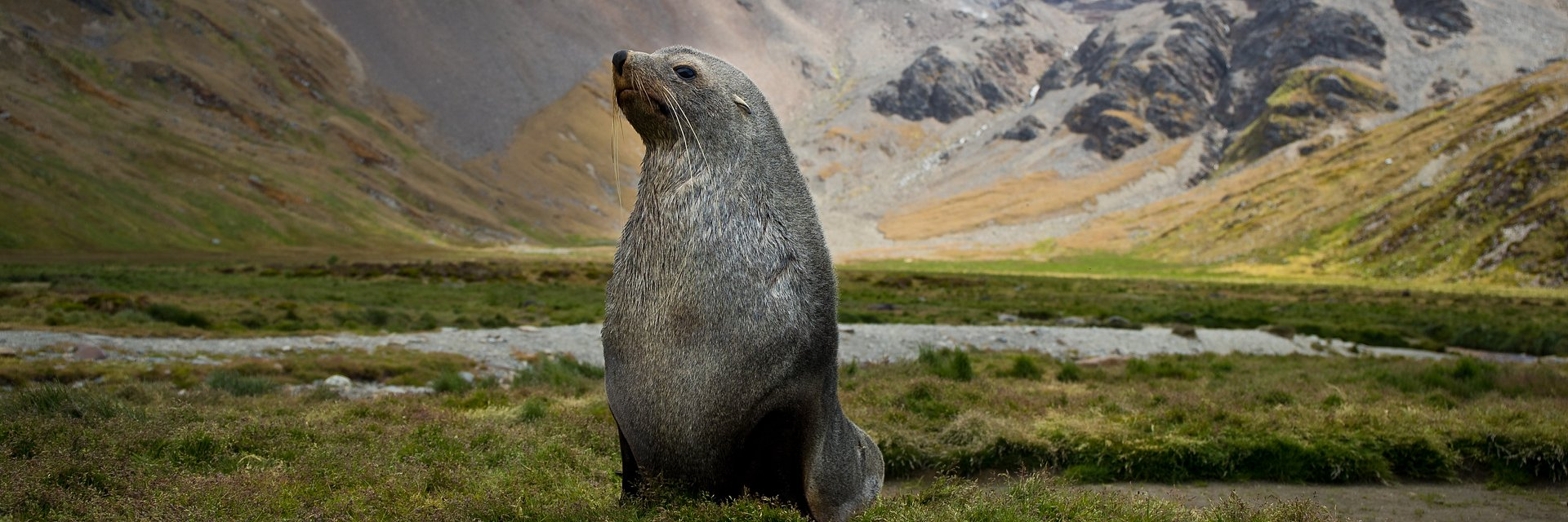 """Wyspa słynąca z największego na świecie zagęszczenia dzikich zwierząt - """"Najdziksza wyspa świata"""" w kwietniu na kanale National Geographic Wild"""