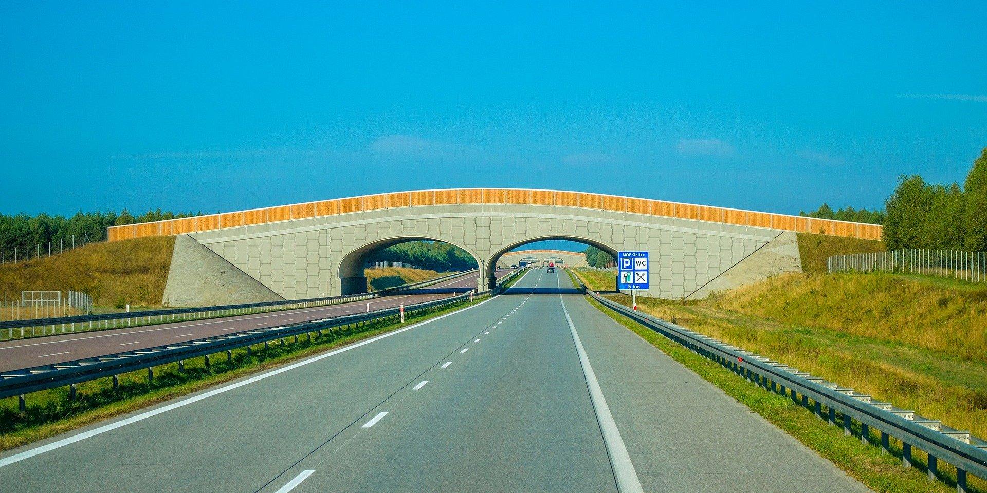 Milionowe inwestycje w przejścia dla zwierząt na polskich drogach