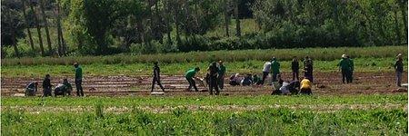SEMEAR transforma investigadores do iBET em agricultores por um dia