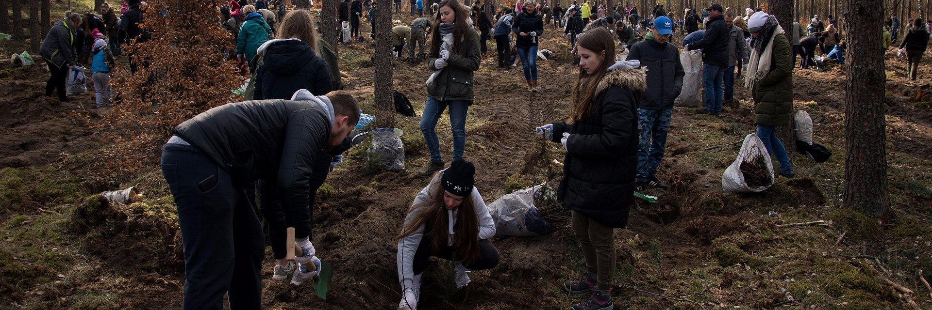 Zasadziliśmy 70 tysięcy drzew!