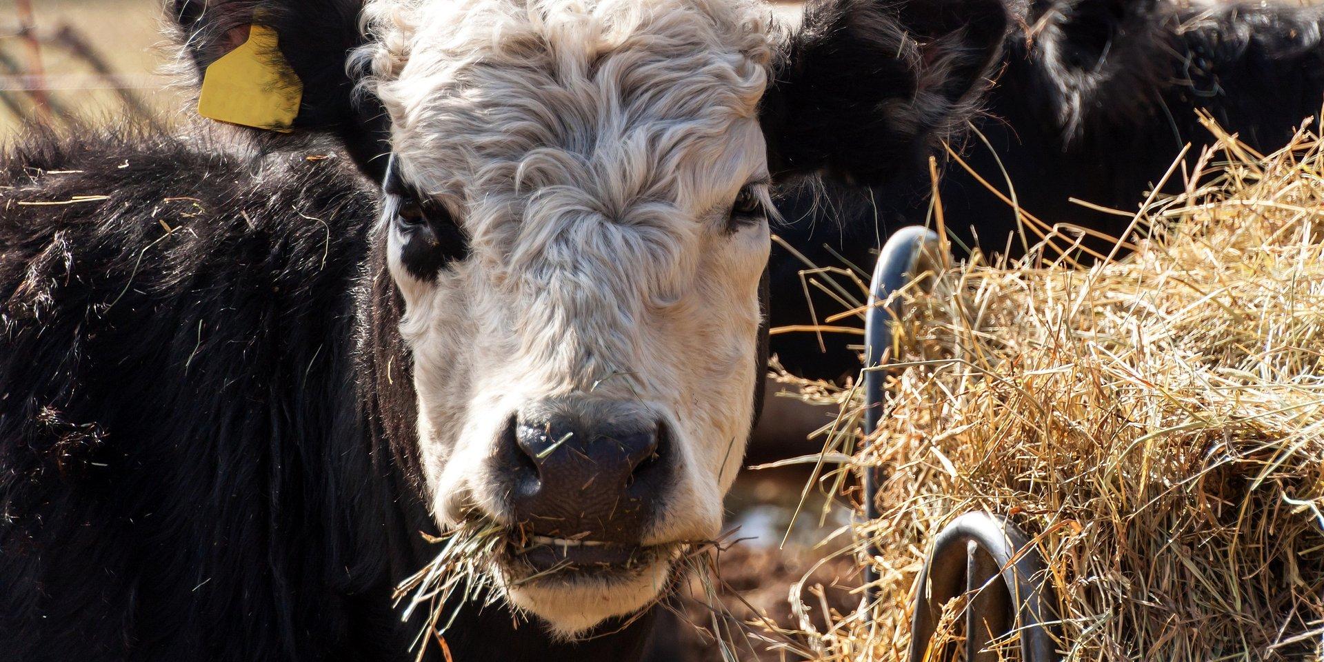 WEBINAR: System VLOG. Certyfikacja non-GMO w łańcuchu produkcji żywności - zapraszamy do zapisu!