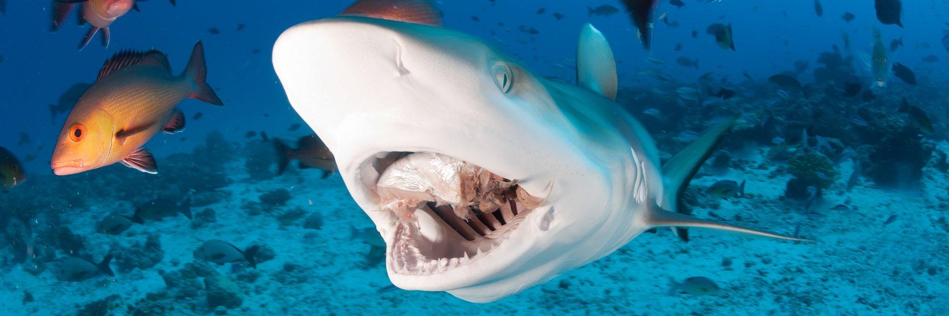 """Zabójczy lipiec w National Geographic Wild. Startuje """"Miesiąc z rekinami"""""""