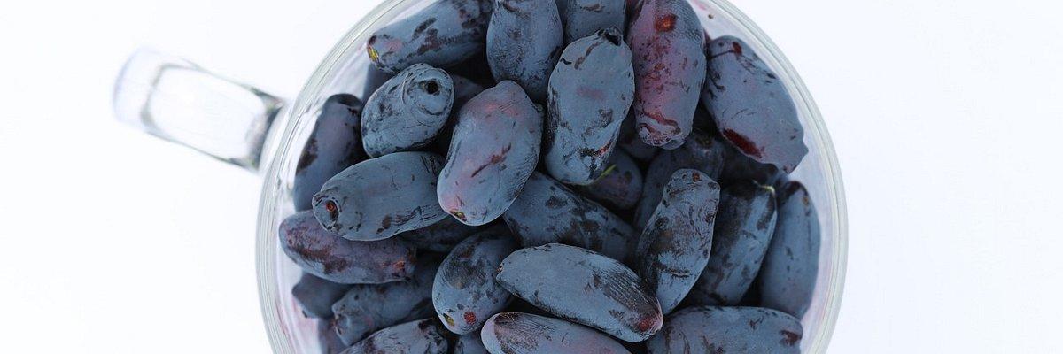 Jagoda kamczacka – nowy gatunek uprawny krzewów owocowych w Polsce