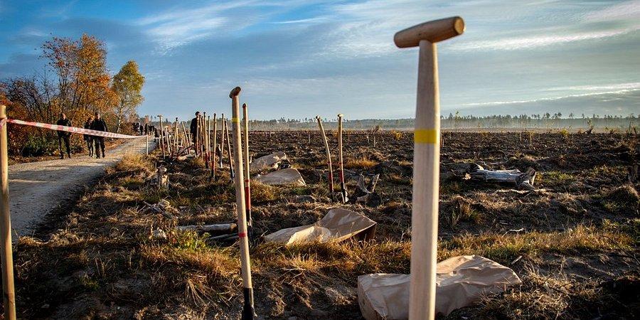 Torus inicjuje nasadzanie drzew w Nadleśnictwie Lipusz