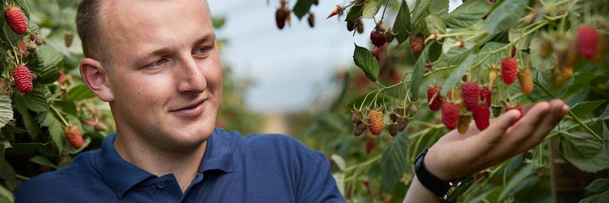 Plantatorzy owoców zapraszają branżę lodową do promocji lodów jagodowych