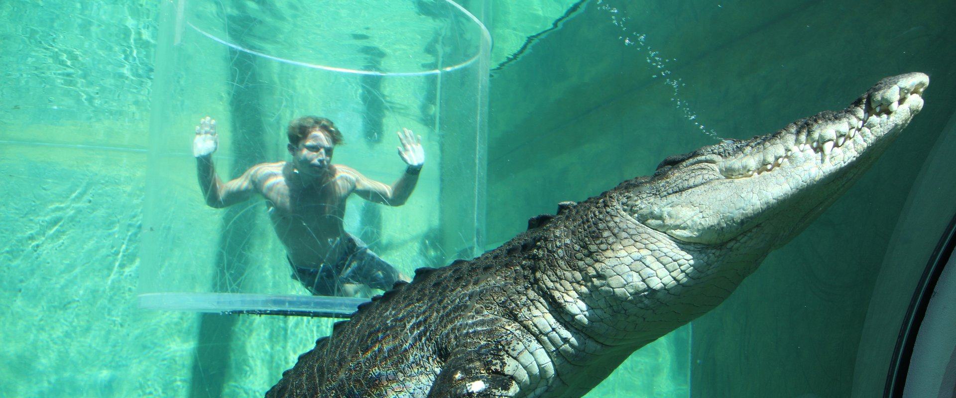 Największe, najbardziej zabójcze, żyjące na samym końcu świata – takie zwierzęta będziemy obserwować w sierpniu z National Geographic Wild. Zoologia może być ekstremalna!