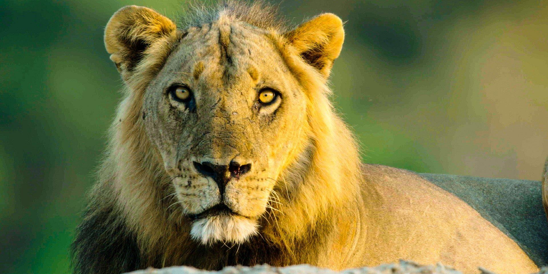 Wrześniowe propozycje programowe National Geographic Wild
