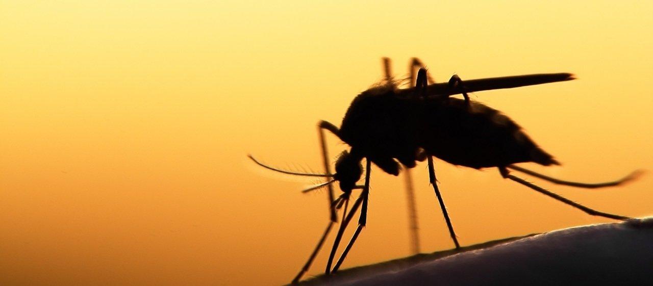 Niestety, to będzie lato komarów