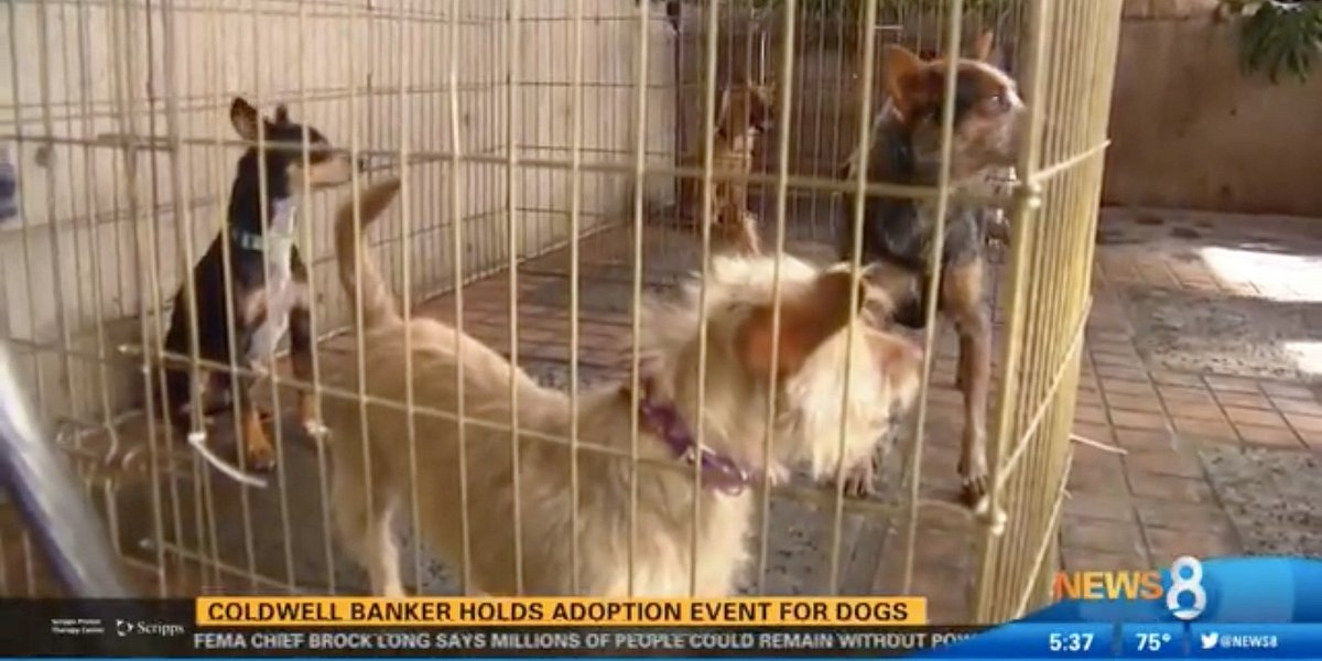 Coldwell Banker Finds Homes for Dogs at San Diego Adoption Event