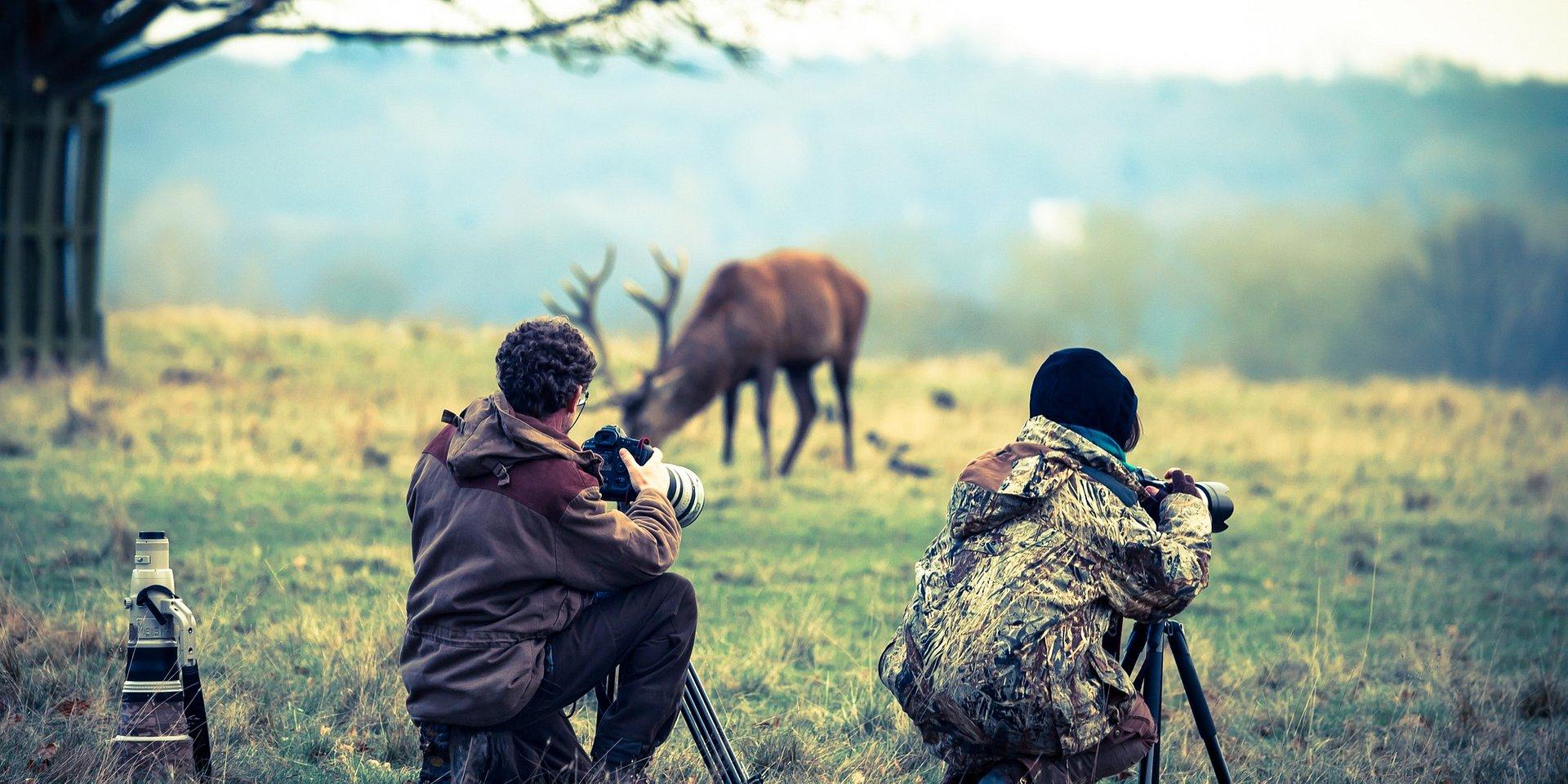 Jak fotografować zwierzęta?