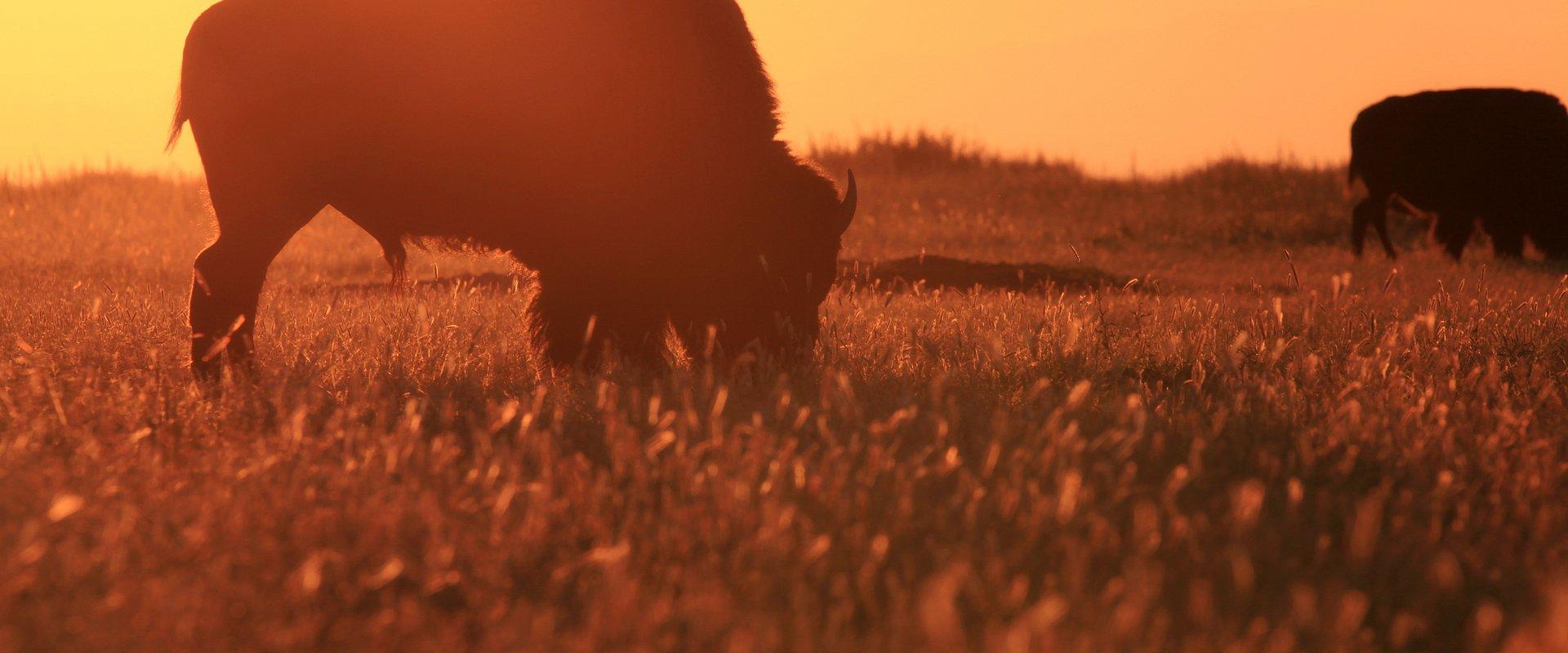 Listopadowe propozycje National Geographic Wild