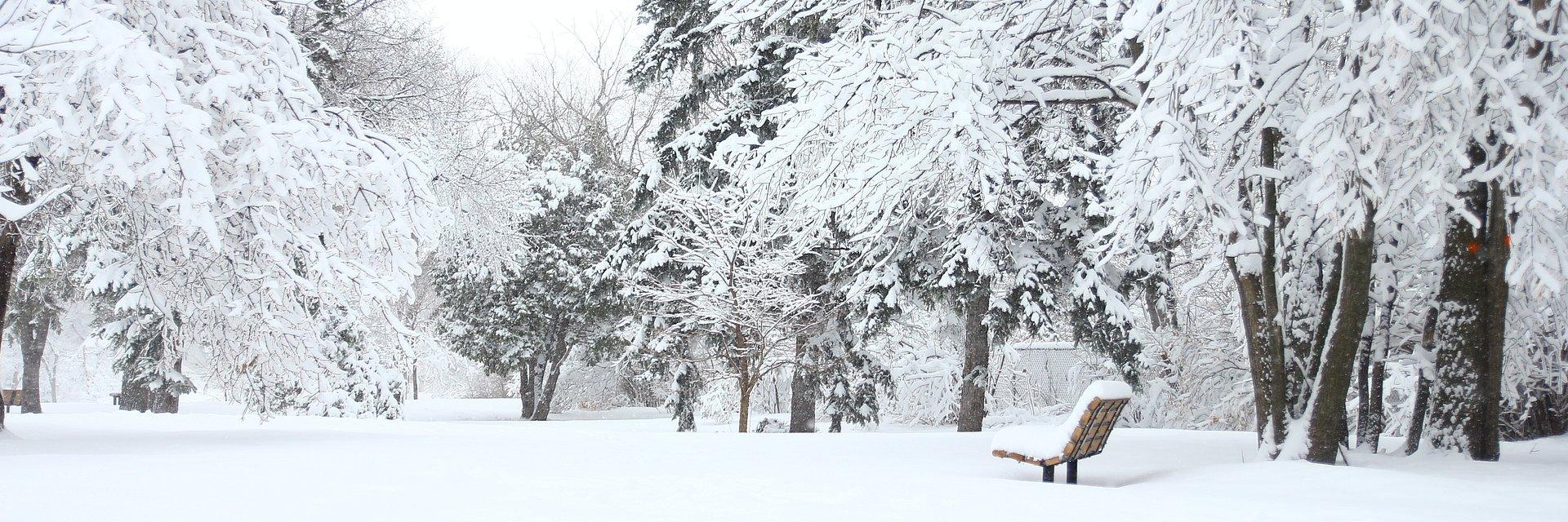 Електрическите тротинетки на Lime остават в София и през зимния сезон