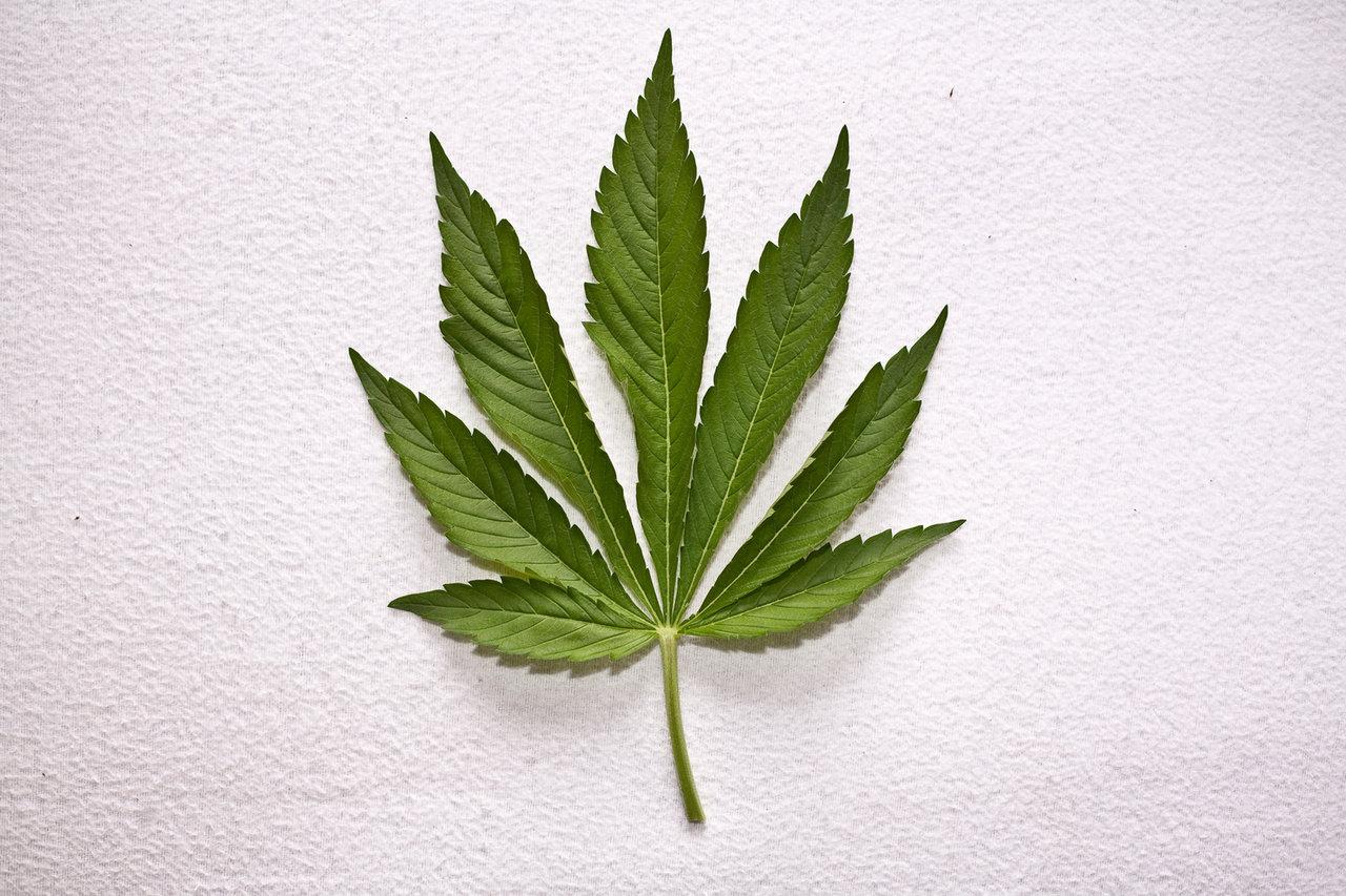 Gorący kartofel, czyli prace nad legalizacją leczniczej marihuany