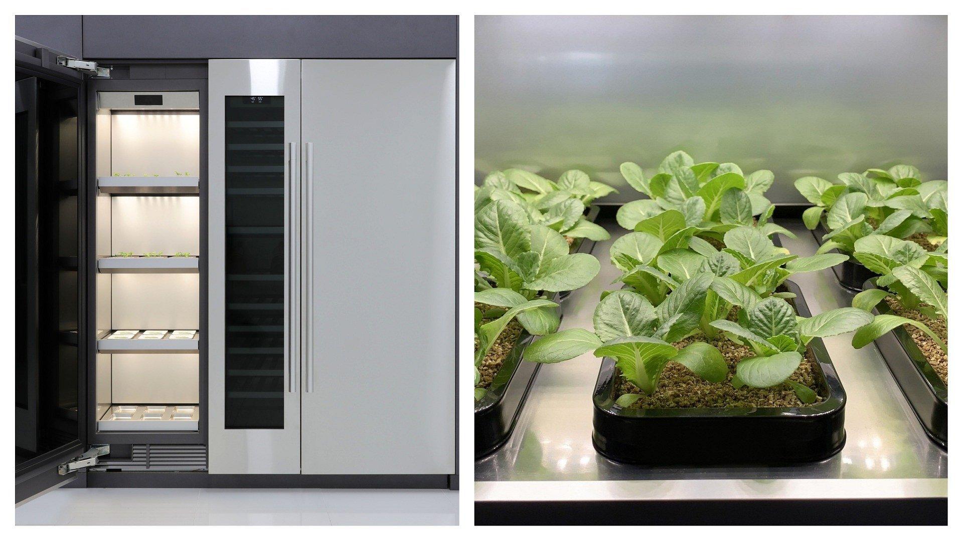 CES 2020: Rewolucja w uprawianiu warzyw! LG prezentuje pierwsze urządzenie do uprawy roślin w domu
