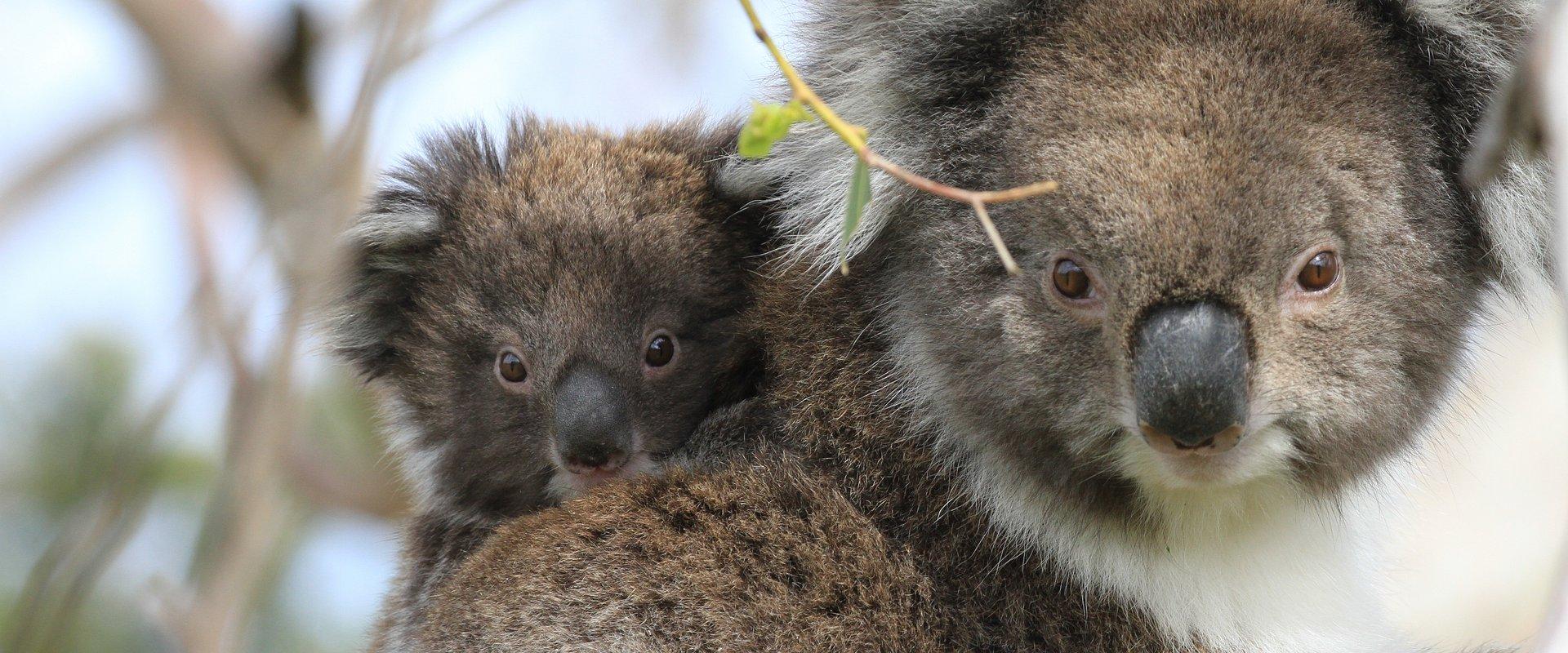 Kontynent pełen zagrożonych skarbów natury. National Geographic Wild poświęci całe niedzielne pasmo programom o Australii