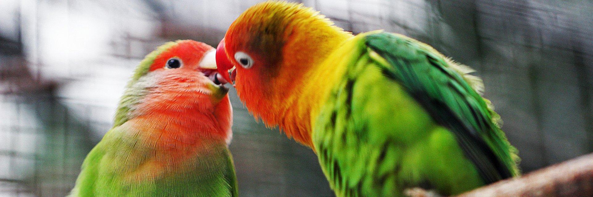 Walentynki - miłość wśród ptaków