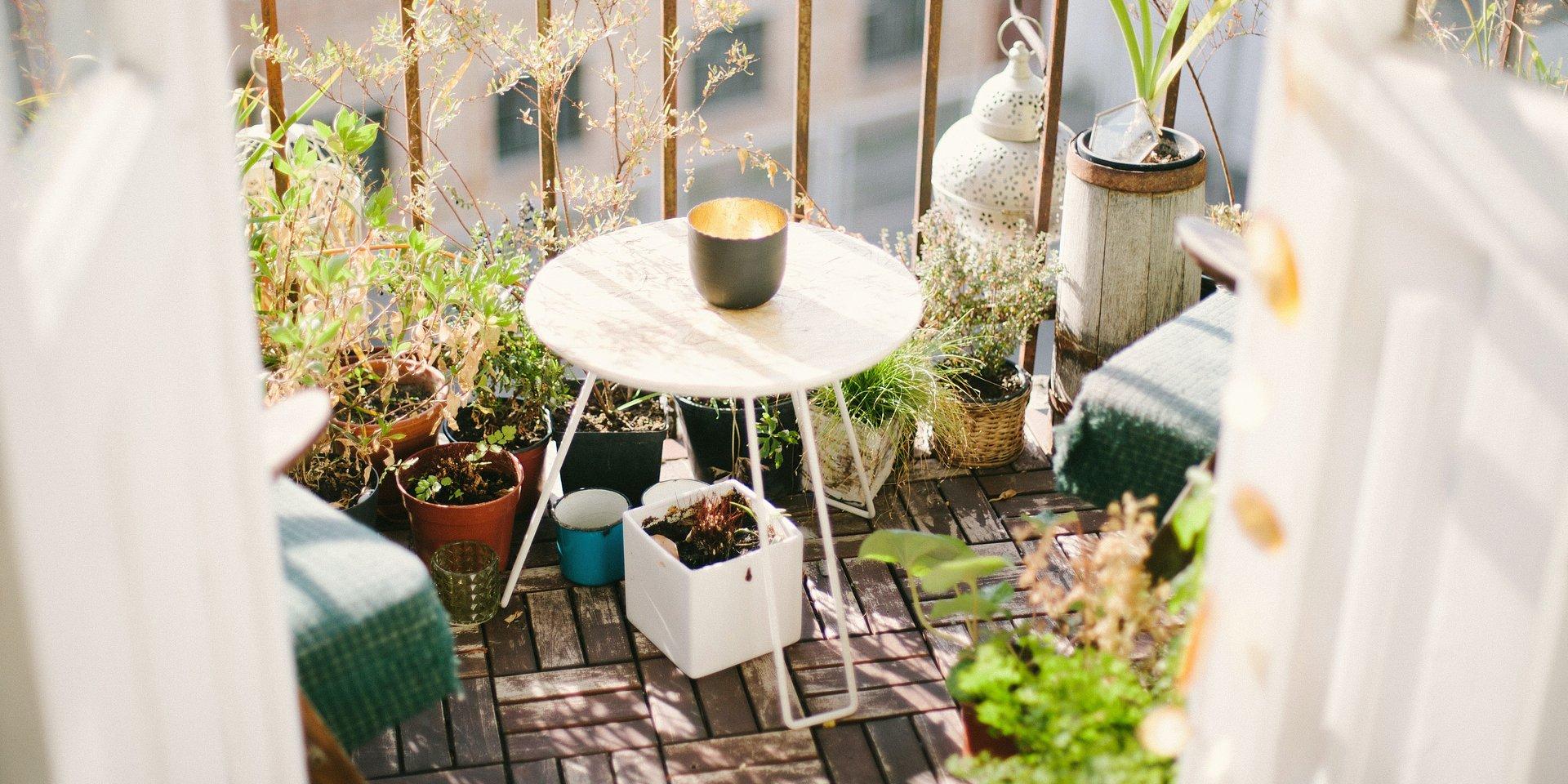 Jak stworzyć swój azyl w miejskiej dżungli? Poznaj sposoby na ogród w bloku!