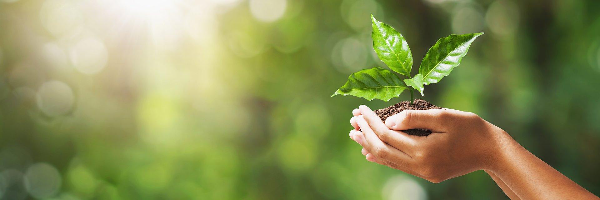 Światowy Dzień Ziemi – 5 prostych kroków ku temu, by żyć bliżej Matki Natury