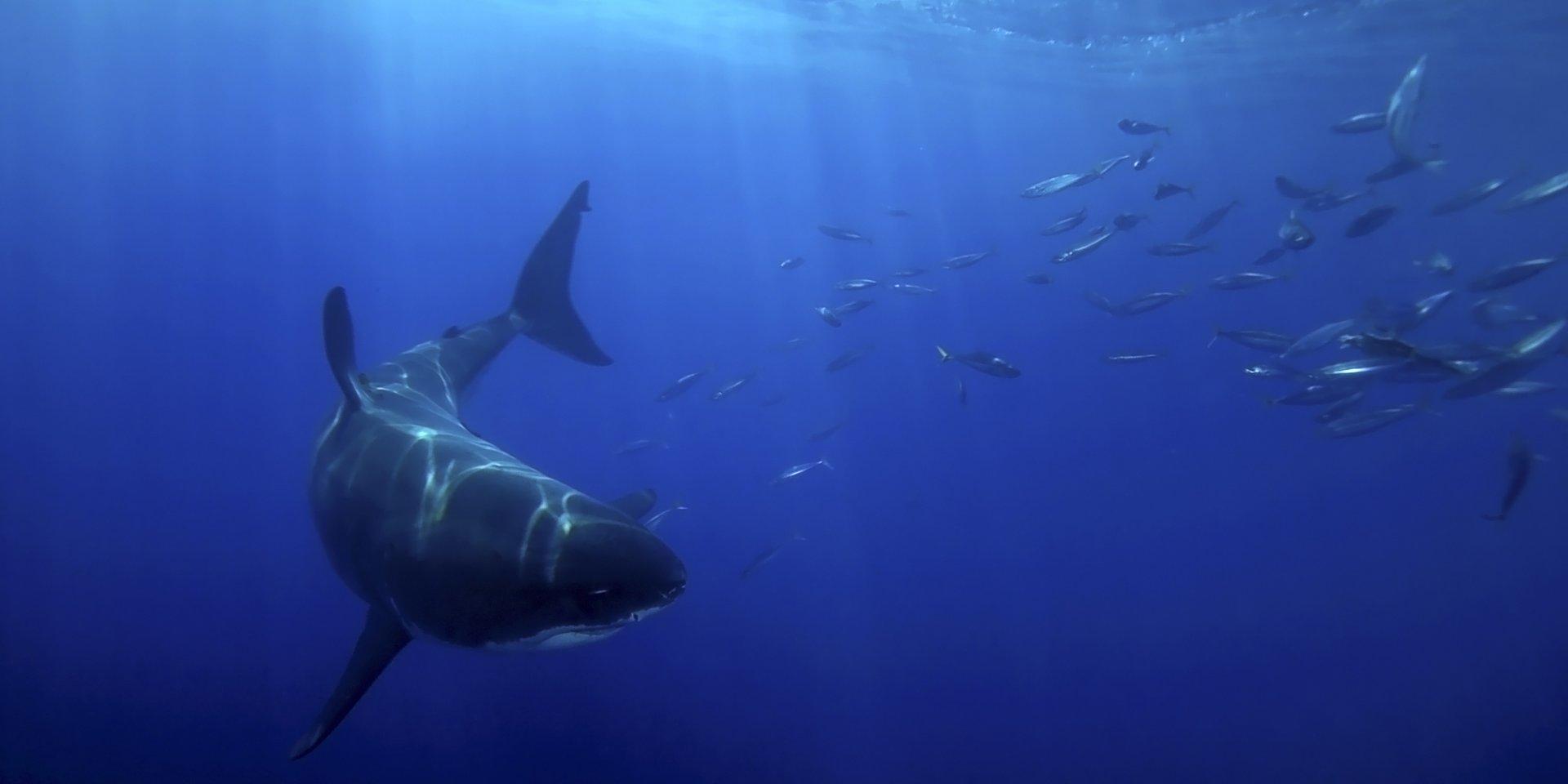 Światowy Dzień Oceanów z National Geographic Wild- wszystkich nas łączy wielka błękitna głębia