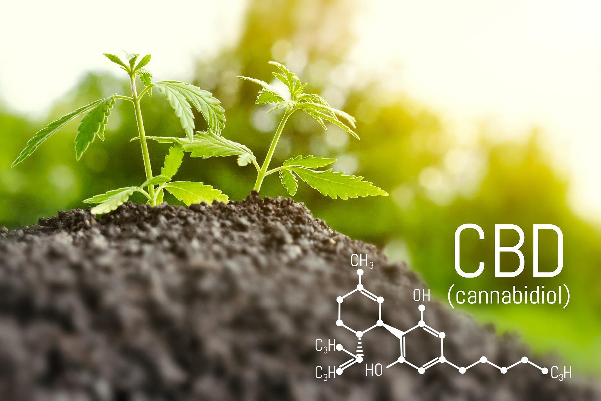 CBD może zmniejszyć ryzyko infekcji koronawirusem