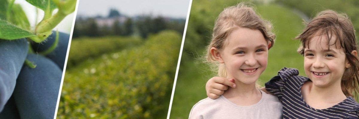 Poznaj jagodę kamczacką na jednej z 27 polskich plantacji
